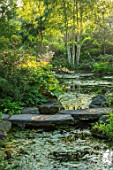 MORTON HALL, WORCESTERSHIRE: STEPPING STONES OVER WATER WITH RODGERSIA SAMBUCIFOLIA, PERENNIALS, SUMMER, WOODLAND, POND, MOSITURE LOVING, BOG, PLANTS, POOL