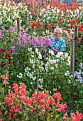 ROGER PARSONS SWEET PEAS, WEST SUSSEX: ROGER PARSONS IN AMONGST THE NATIONAL COLLECTION OF SWEET PEAS AND ECHIUMS GROWING BESIDE A FIELD. DAWN, SUNRISE, LATHYRUS, CUTTING, GARDEN