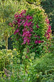 COTTAGE ROW, DORSET: ARCH WITH CLEMATIS MADAME JULIA CORREVON. BRIGHT, PINK, PETALS, FLOWERS, CLIMBERS, CLIMBING