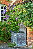 COTTAGE ROW, DORSET: LEAD CONTAINER - BLUE FLOWERS OF CLEMATIS DURANDII WITH EUONYMUS FORTUNEI SILVER QUEEN. PETALS, FLOWERS, CLIMBERS, CLIMBING, SHRUB, SUMMER, DECIDUOUS, PURPLE