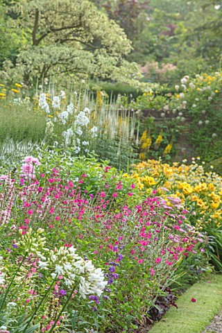 WOLLERTON_OLD_HALL_SHROPSHIRE_THE_MAIN_HERBACEOUS_BORDER_GRAVEL_PATH_ARGYRANTHEMUM_SALVIA_BETHELLII_