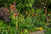 MORTON HALL, WORCESTERSHIRE: BORDER WITH RED, ORANGE, YELLOW FLOWERS OF LILIUM PARDALINUM. BULBS, SUMMER, PATTERNED, LILLIES, LILIES, LILY, LILLY, PATTERNS, SPECKLED