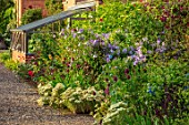 MORTON HALL, WORCESTERSHIRE: THE KITCHEN GARDEN, JULY. HERBACEOUS BORDER, SUNSET. WALLED, GREENHOUSE, GRAVEL, PATH, ALLIUM SPAEROCEPHALON, CLEMATIS VITICALLA EMILIA PLATER