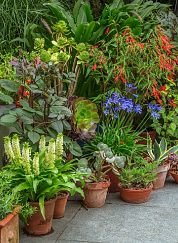 22A_THE_AVENUE_HITCHIN_HERTFORDSHIRE_DESIGNER_MARTIN_WOODS_PATIO_CONTAINERS_SUCCULENTS_EUCOMIS_POLE_