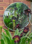 22A THE AVENUE, HITCHIN, HERTFORDSHIRE. DESIGNER MARTIN WOODS: WALL WITH ROUND MIRROR - AEONIUM ARBOREUM ZWARTKOP, EUCOMIS POLE EVANSII. ORNAMENT, SUCCULENTS