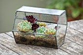 22A THE AVENUE, HITCHIN, HERTFORDSHIRE. DESIGNER MARTIN WOODS: SMALL GLASS TERRARIUM ON WOODEN TABLE. CLOCHE, SUCCULENTS