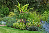 THE SALUTATION GARDEN, KENT: LAWN, BORDERS IN NEW EXOTIC, TROPICAL, GARDEN. FOLIAGE, CANNA BETHANY, MUSA BASJOO, PHORMIUMS, FUCHSIA ARBORESCENS. SUMMER