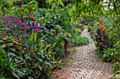 THE SALUTATION GARDEN, KENT: BRICK PATH, BORDER, EXOTIC, TROPICAL, GARDEN. HEDYCHIUM DENSIFLORUM ASSAM ORANGE, CLEOME SPINOSA VIOLET QUEEN, RICINUS GIBSONII, FICUS ADAM, AMARANTHUS