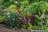 THE SALUTATION GARDEN, KENT: PATH, BORDER, EXOTIC, TROPICAL, GARDEN. DAHLIA SALUTATION SEEDLING, CANNA DURBAN, ARUNDO DONAX GOLDEN CHAIN, ACER NEGONDO FLAMINGO, FUCHSIA ARBORESCENS