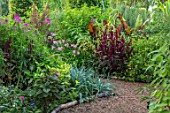 THE SALUTATION GARDEN, KENT: BORDER IN NEW EXOTIC, TROPICAL, GARDEN. FOLIAGE, ENSETE VENTRICOSUM MAURELII, AMARANTHUS VELVET CURTAINS, CRINUM X POWELLII, CLEOME VIOLET QUEEN