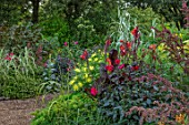 THE SALUTATION GARDEN, KENT: BORDER IN NEW EXOTIC, TROPICAL, GARDEN. DAHLIA GRYSONS YELLOW SPIDER, CANNA RED, ARUNDO DONAX PEPPERMINT STICK, DAHLIA SALUTATION SEEDLING