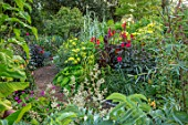 THE SALUTATION GARDEN, KENT: BORDER IN NEW EXOTIC, TROPICAL, GARDEN. DAHLIA GRYSONS YELLOW SPIDER, CANNA RED MELIANTHUS MAJOR, ARUNDO PEPPERMINT STICK, PERSICARIA POLYMORPHA