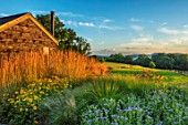 PRIVATE GARDEN, SURREY: DESIGNER ANTHONY PAUL: COUNTRYSIDE, PERENNIAL PLANTING. CALAMAGROSTIS KARL FOERSTER, RUDBECKIA GOLDSTURM, ASTER X FRIKARTII MONCH, ECHINACEA PURPUREA