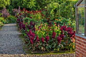 MORTON HALL GARDENS, WORCESTERSHIRE: KITCHEN GARDEN IN LATE SUMMER. BEDS WITH AMARANTHUS, ZINNIA. WALL, WALLED, COUNTRY, HOUSE, CLASSIC, VEGETABLE, DAHLIAS, DARK, RED