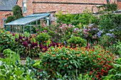 MORTON HALL GARDENS, WORCESTERSHIRE: KITCHEN GARDEN IN LATE SUMMER. BEDS WITH AMARANTHUS, TITHONIA. WALL, WALLED, COUNTRY, HOUSE, CLASSIC, VEGETABLE, POTAGER, GREENHOUSE