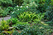 MORTON HALL, WORCESTERSHIRE: ROCKERY, LATE, SUMMER. FERNS, HYDRANGEA ARBORESCENS SUBSP. DISCOLOR STERILIS, SHADE, SHADY, GREEN