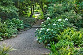 MORTON HALL, WORCESTERSHIRE: ROCKERY, LATE, SUMMER. GRAVEL, PATH, FERNS, HYDRANGEA ARBORESCENS SUBSP. DISCOLOR STERILIS, SHADE, SHADY, GREEN