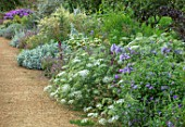 PARHAM, SUSSEX: PATH, BLUE BORDER: ASTER FRIKARTII MONCH, SCABIOSA OXFORD BLUE, AMMI MAJUS, VERBENA BONARIENSIS, SALVIA PURPLE RAIN, ARTEMISIA GIUZHOU GROUP, BORDERS, SUMMER