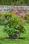 PARHAM, SUSSEX: CONTAINER IN WALLED GARDEN PLANTED WITH CANNA EREBUS, GAURA WHIRLING BUTTERFLIES, PELARGONIUM TOMENTOSUM, GRASS, LAWN, ENGLISH, SUMMER, LATE, GARDEN