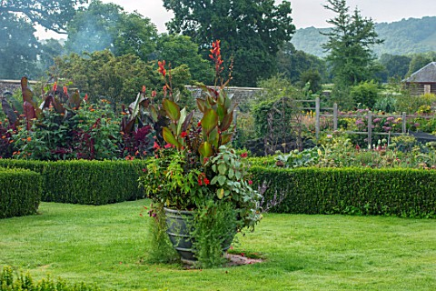 PARHAM_SUSSEX_CONTAINER_IN_WALLED_GARDEN__CANNA_INDICA_PURPUREA_DAHLIA_BISHOP_OF_LLANDAFF_PLECTRANTH
