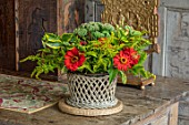 PARHAM, SUSSEX: THE LONG GALLERY - CONTAINER FLOWER DISPLAY WITH SEDUM AUTUMN JOY, SOLIDAGO, GOLDEN PRIVET, RED ZINNIA, CUTTING, ARRANGEMENT