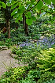 MORTON HALL, WORCESTERSHIRE: ROCKERY, LATE, SUMMER. FERNS, ASTER, EURYBIA X HERVEYI SYN ASTER MACROPHYLLUS TWILIGHT, HYDRANGEA ARBORESCENS SUBSP. DISCOLOR STERILIS, SHADE, SHADY