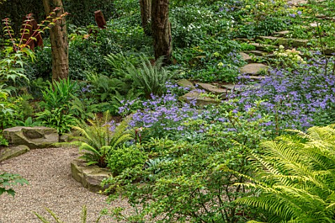 MORTON_HALL_WORCESTERSHIRE_ROCKERY_LATE_SUMMER_FERNS_ASTER_EURYBIA_X_HERVEYI_SYN_ASTER_MACROPHYLLUS_