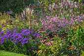 PETTIFERS, OXFORDSHIRE: KLIMT BORDER. ASTERS, PINK JAPANESE ANEMONE, ECHINACEA, BORDERS, FALL, AUTMN, LATE, SUMMER, GRASS, PATH, ENGLISH, COUNTRY, GARDEN
