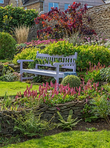 PETTIFERS_OXFORDSHIRE_LAWN_PURPLE_WOODEN_BENCH_SEAT_COTINUS_BORDERS_FALL_AUTUMN_LATE_SUMMER_PATH_ENG
