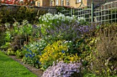 BOURTON HOUSE GARDEN, GLOUCESTERSHIRE: AUTUMN BORDER IN SEPTEMBER. LAWN, ASTERS, NICOTIANA, HERBACEOUS, LATE SUMMER, ENGLISH, COUNTRY, GARDEN