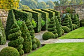 BOURTON HOUSE GARDEN, GLOUCESTERSHIRE: GRAVEL PATH, CLIPPED BOX, PRIVET TOPIARY AGINST WALL, CONTAINERS WITH WHITE ARGYRANTHEMUMS. EVERGREEN, FORMAL, ENGLISH, LAWN, CONES, GREEN