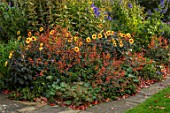 BOURTON HOUSE GARDEN, GLOUCESTERSHIRE: LAWN, BORDER WITH ACONITUMS, DAHLIA MOONFIRE, SALVIA ELEGANS HONEY MELON, AUTUMN, FALL, SEPTEMBER, ENGLISH, HERBACEOUS, LATE, SUMMER