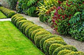BOURTON HOUSE GARDEN, GLOUCESTERSHIRE: LAWN, GRAVEL PATH, CLIPPED TOPIARY BOX HEDGES, HEDGING, LOW, TROPICAL, AUTUMN, FALL, SEPTEMBER, LATE, SUMMER, FORMAL, CLASSIC, ENGLISH