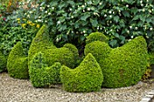BOURTON HOUSE GARDEN, GLOUCESTERSHIRE: GRAVEL PATH, CLIPPED TOPIARY BOX HENS AND CHICKENS. EVERGREENS, FORMAL, GREEN, HEDGES, HEDGING, SHAPES, SHAPED, QUIRKY, BIRDS