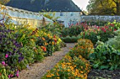 FORDE ABBEY, SOMERSET: THE VEGETABLE GARDEN, POTAGER. GRAVEL PATH BY GREENHOUSE, BORDER WITH SALVIA ARMISTAD, DAHLIA DAVID HOWARD, GREENHOUSE, FLOWERS, DAHLIAS, OCTOBER, AUTUMN