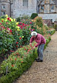 FORDE ABBEY, SOMERSET: THE VEGETABLE GARDEN, POTAGER. CHARLOTTE ROPER CUTTING ARCTOTIS BESIDE GRAVEL PATH, FLOWERS, FLOWERING, OCTOBER, AUTUMN