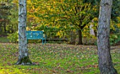 BLUEBELL ARBORETUM AND NURSERY, DERBYSHIRE: AUTUMN, FALL COLOURS WITH BLUE SEAT, BENCH. OCTOBER, TREES, LEAVES, GARDEN