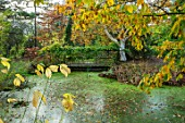 BLUEBELL ARBORETUM AND NURSERY, DERBYSHIRE: AUTUMN, FALL COLOURS, POOL, LAKE, POND, WATER, BRIDGE, WISTERIA, BETULA UTILIS SUBSP JACQUEMONTII JERMYNS. OCTOBER, TREES, LEAVES