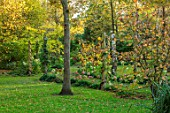 BLUEBELL ARBORETUM AND NURSERY, DERBYSHIRE: AUTUMN, FALL COLOURS, HYDRANGEAS, LAWN, OCTOBER, TREES, LEAVES