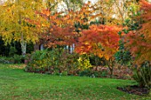 MORTON HALL, WORCESTERSHIRE: AUTUMN, FALL: LAWN, GRASS, ACER PALMATUM SEIRYU, MAPLES, JAPANESE, BIRCHES, BETULA NIGRA HERITAGE, PRUNUS SHIROFUGEN, BORDER, TREES, SHRUBS