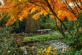 MORTON HALL, WORCESTERSHIRE: AUTUMN, FALL: STROLL GARDEN, LOWER POND, POOL, WATER, REFLECTED, REFLECTIONS, ACER PALMATUM SEIRYU, MAPLES, JAPANESE, WOODEN, BENCH, SEAT