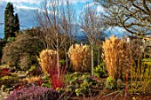 BODNANT GARDEN, WALES, THE NATIONAL TRUST: THE WINTER GARDEN. GRASSES, BETULA, BIRCHES, TRUNKS, STEMS, SHRUBS, TREES, EVERGREENS, CONIFERS, BORDERS, FLOWERBEDS