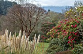 BODNANT GARDEN, WALES, THE NATIONAL TRUST: THE WINTER GARDEN. VIEW TO SNOWDONIA WITH RHODODENDRON AND ACER GRISEUM