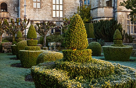 RODMARTON_MANOR_GLOUCESTERSHIRE_WINTER_FEBRUARY__THE_TROUGHERY_CLIPPED_TOPIARY_YEW_DAWN_LIGHT_SUNRIS