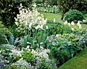 TULIPS IN WHITE BORDER AT CHENIES MANOR GARDEN  BUCKS. L TO R: WHITE TRIUMPHATOR  FRANCOISE. LUNARIA ANNUA BEHIND