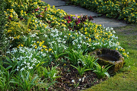 LITTLE_COURT_HAMPSHIRE__BORDER_WITH_STONE_WATER_TROUGH_BOWL_GALANTHUS_ACONITES_AND_HELLEBORES_PATH_F