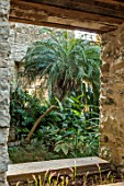 ABERGLASNEY GARDENS, CAMARTHENSHIRE, WALES. THE NINFARIUM - WINDOW TO PHOENIX ROEBELENII - PYGMY DATE PALM. RUINS, SUB TROPICAL, CONSERVATORY, INSIDE