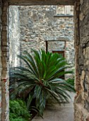 ABERGLASNEY GARDENS, CAMARTHENSHIRE, WALES. THE NINFARIUM - DOORWAY IN RUINS, CYCAS REVOLUTA, SAGO PALM, SUB TROPICAL, CONSERVATORY, INSIDE, PALMS, TREES