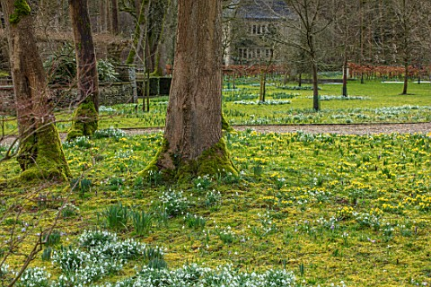 ABLINGTON_MANOR_GLOUCESTERSHIRE_ACONITES_SNOWDROPS_CROCUS_TOMASINIANUS_IN_MOSS_EARLY_SPRING_LATE_WIN