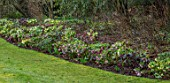 KAPUNDA PLANTS, BATH: LAWN, HELLEBORES. LENTEN, PERENNIALS, BORDERS, BEDS, FLOWERBEDS, GROUNDCOVER, MARCH, LATE WINTER, EARLY SPRING